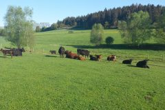 cropped-20150507_075159